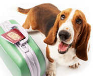 dog-luggage-2